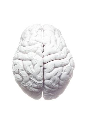 brain_varticle